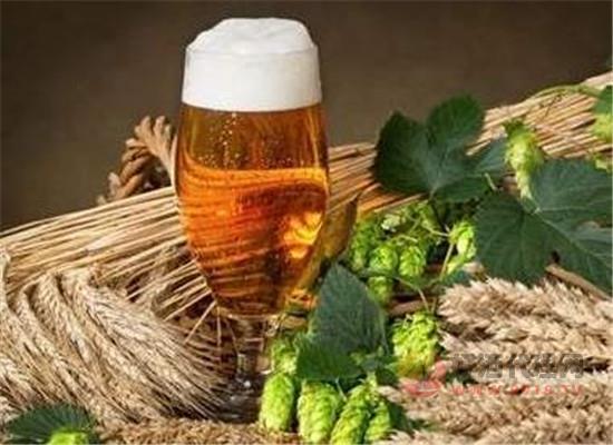 小麦啤酒为什么受欢迎