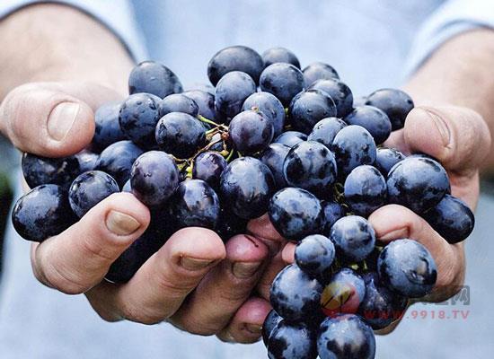 張裕精品干紅葡萄酒釀酒葡萄