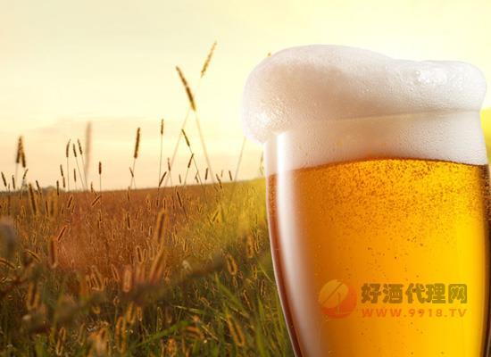 小麦啤酒和大麦啤酒哪个好喝?有什么区别?