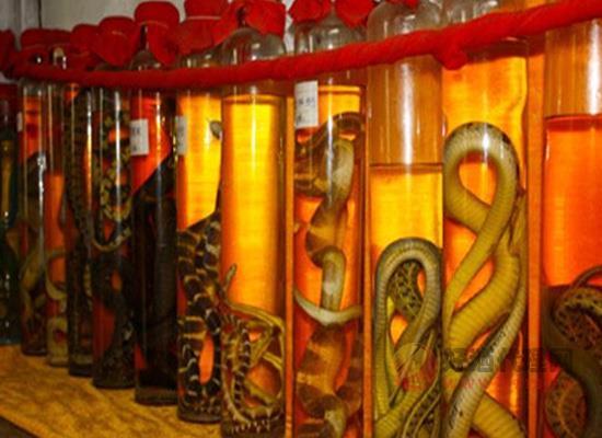 泡蛇酒蛇为何不容易死?泡制顺序颠倒蛇可能假死