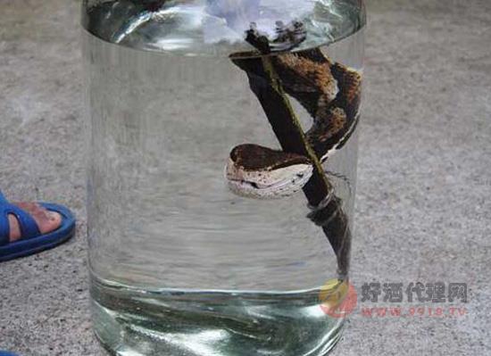 蛇酒有什么作用?五步蛇酒的功效与作用,厉害了