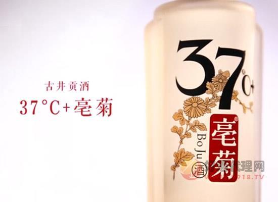古井开启健康白酒市场,37℃亳菊引领健康风潮