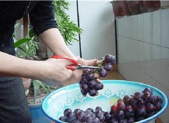 自釀葡萄酒怎么過濾,家釀紅酒步驟方法