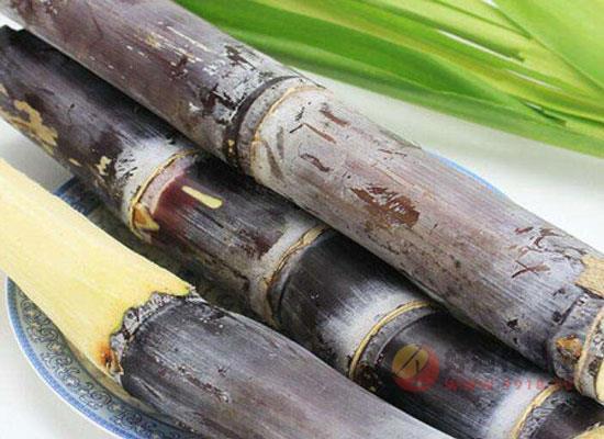 甘蔗也可以酿酒吗,甘蔗酒怎么酿造