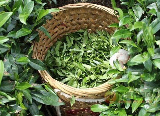 家里茶葉如何保存,茶葉存放簡單方法講解