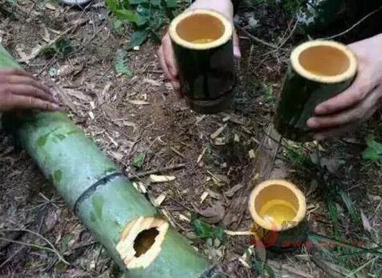 安吉竹酒,竹味濃香,舌尖上的養生美酒!