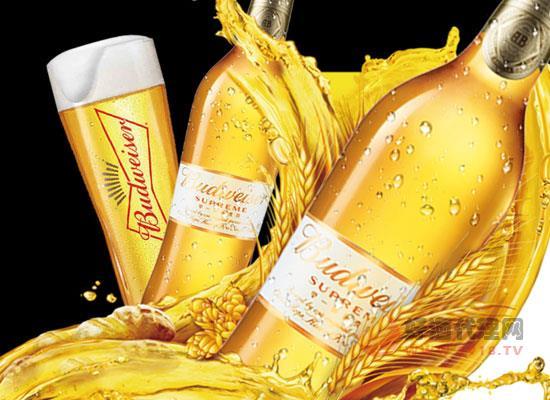 燕京啤酒批發價格貴嗎,燕京菊花啤酒330ml一瓶多少錢