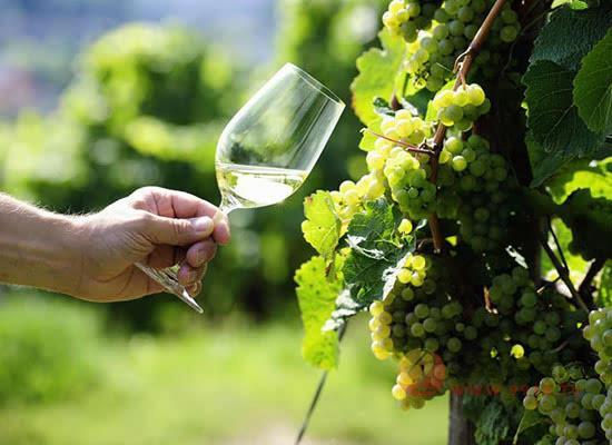 白葡萄酒怎么选,白葡萄酒的选购技巧有哪些