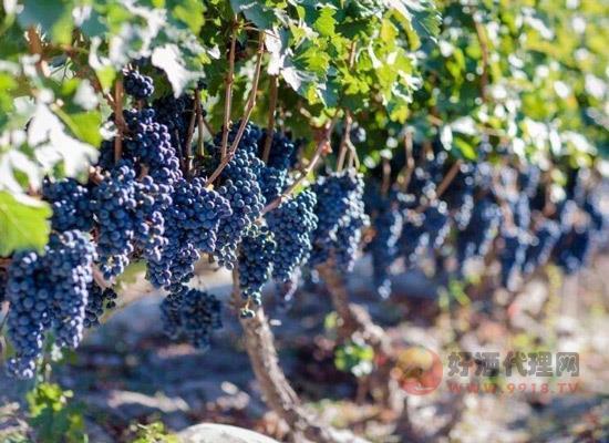 新疆有哪些红酒品牌,新疆葡萄酒介绍