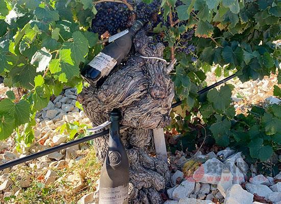 教皇新堡干紅葡萄酒價格貴嗎,性價比怎么樣