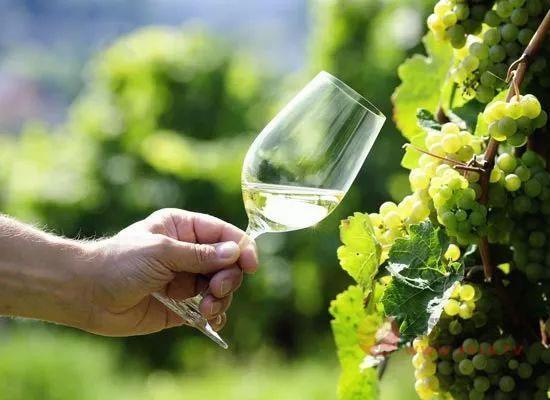 甜型葡萄酒有哪些,四大经典甜酒分别是什么