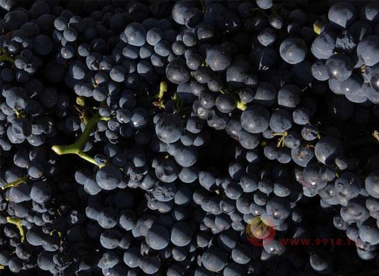 葡萄梗有用吗,葡萄梗在酿酒的作用有哪些