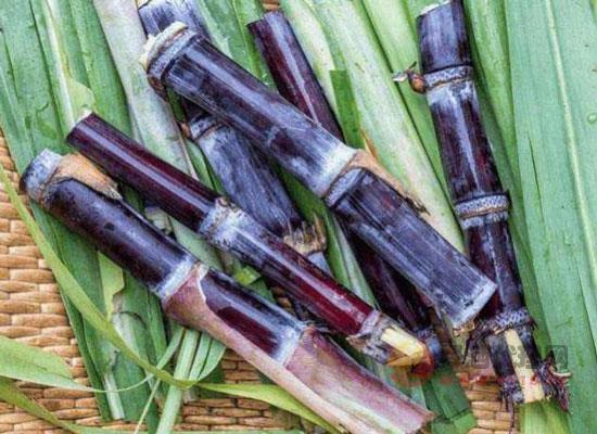 甘蔗酒的釀造方法是什么,簡單幾步教會你