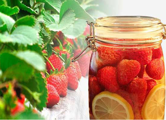 草莓酒的制作方法是什么,簡單釀制美味草莓酒的方法