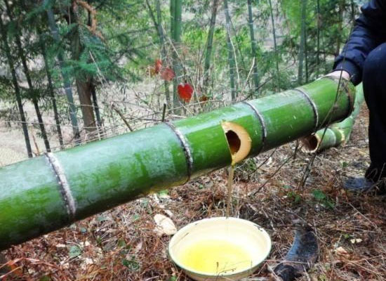 竹筒酒过期了还能喝吗,竹筒酒的保存方法介绍