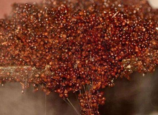 茅臺鎮醬香酒有哪些優勢,為什么如此受歡迎